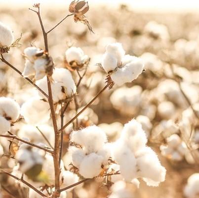 Miért válaszd a biopamut termékeket?